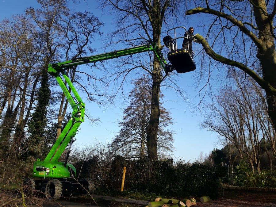 snoeien boom onderhoud tuin hovenier Winsum